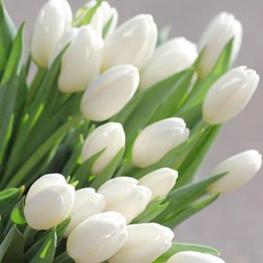 tulips-for-wedding-arrangement
